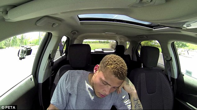 nfl2Bplayer Γιατί είναι εγκληματικό να αφήσεις για 5 λεπτάκια το σκυλί στο αυτοκίνητο video, videos, αυτοκίνητο, βίντεο, ζέστη